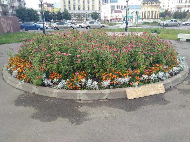 Цветы, снятые на камеру Huawei MediaPad M3 Lite 10.
